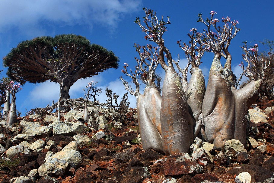 Socotra la Isla que Parece un Mundo Extraterrestre