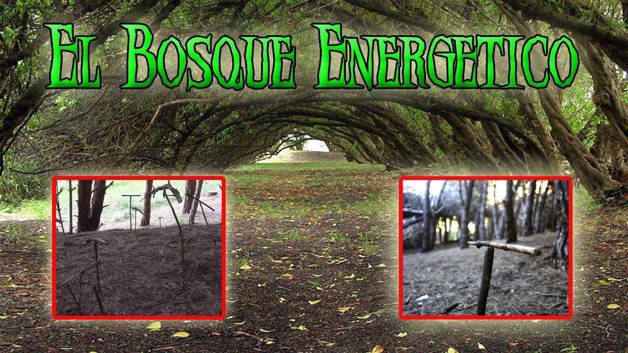 Los Misterios del Bosque Energético