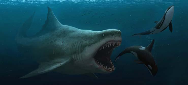 Evidencias que demuestran que el Megalodón existe