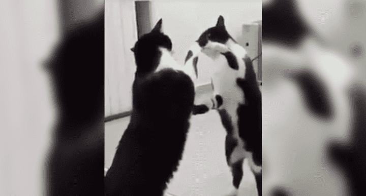 Gato Posa Frente a un Espejo y Sucede Algo Escalofriante