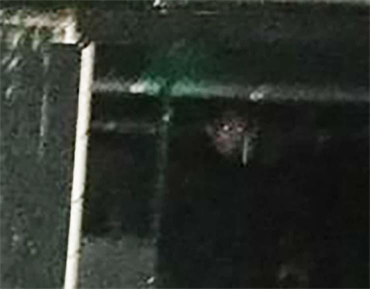 Fotografían el rostro demoníaco de un monje
