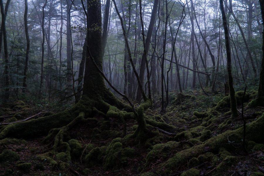 Lugares paranormales a los que viajar