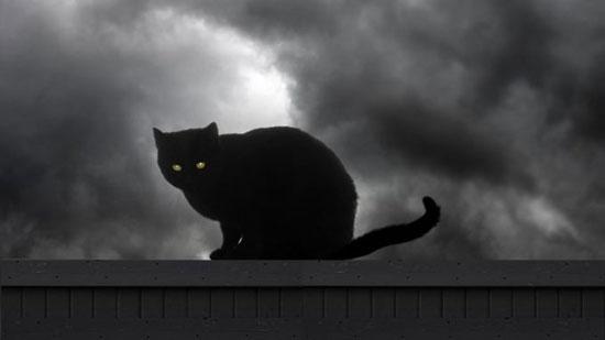 gatos negros de la mala suerte