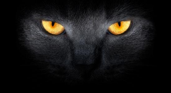 simblogía de los gatos negros