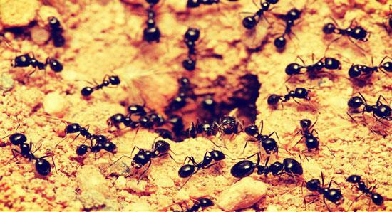 significado de soñar con insectos